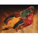 Golden Pheasant - Complete skin - Without tail and head - Natural color.