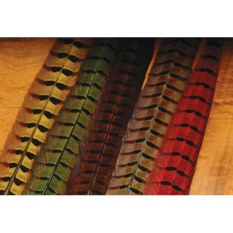 Faisan a Colier - Queue Complète - Choix de 6 couleurs.