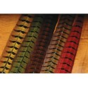 Ringneck Pheasant - Complete Tail - 6 colors.