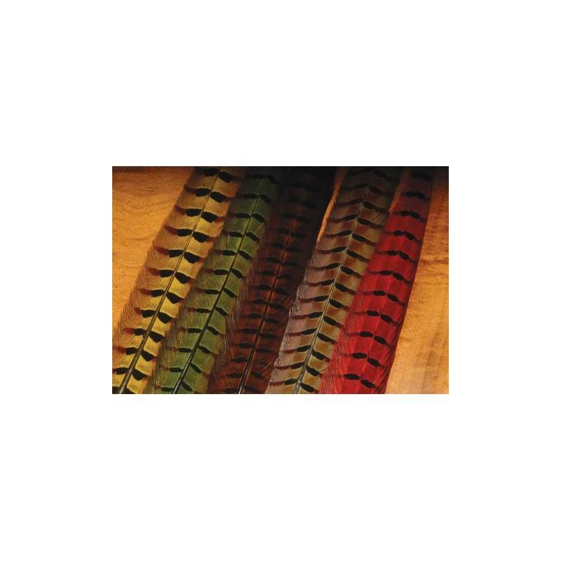 Faisan a colier queue compl te choix de 6 couleurs l 39 ami du moucheur for Choix de couleurs