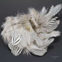 Silver Pheasant - Flanck Feathers - Bag of 3 Gr. - 12 colors.