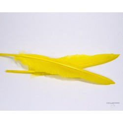 Goose Quills - Bag of 1 Pair - 10 colors.