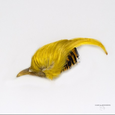 Golden Pheasant - Complete Crest - Grade # 1 - Natural Gold color.