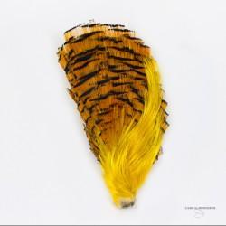 Faisan Doré - Tête Complète - Qualité # 1 - Crête + Pèlerine - Couleur Naturelle.