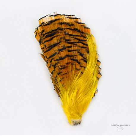 Golden Pheasant - Complete Head - Crest + Tippet - Grade # 1 - Natural color.