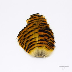 Golden Pheasant - Complete Tippet - Grade 1 - Natural color.