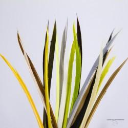 Biots de Dinde - Sac de 4 sections - Choix de 21 couleurs