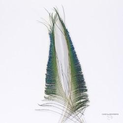 Sabre de Paon - Couleur Naturelle - L'unité.
